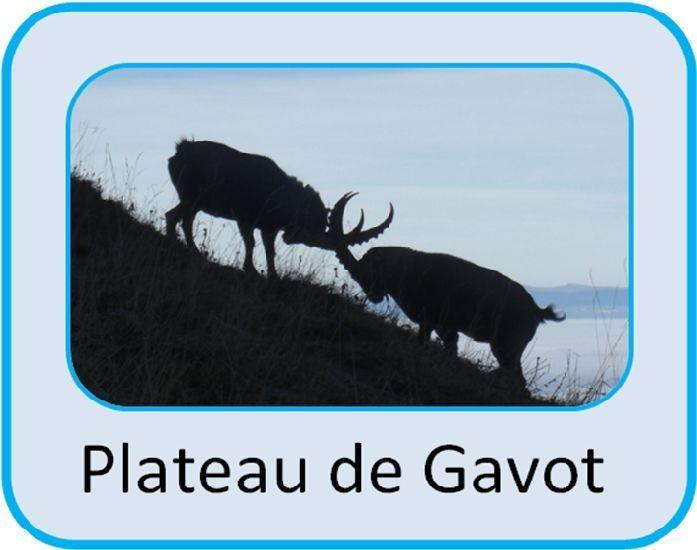 Plateau de Gavot